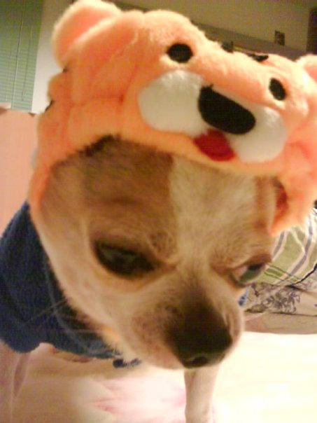 或最搞笑的动物照片(表情+造型+动作),并加上一段最贴切的文字描述,就