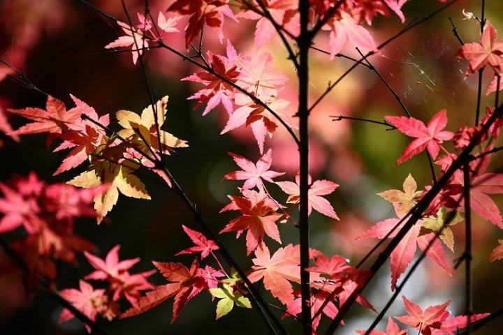 ps风景枫树图片