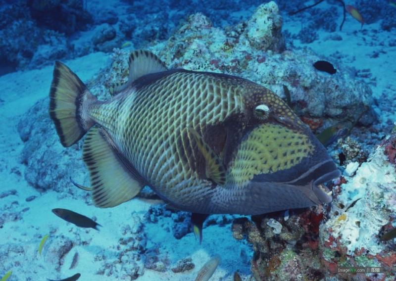 壁纸 动物 海底 海底世界 海洋馆 水族馆 鱼 鱼类 800_568