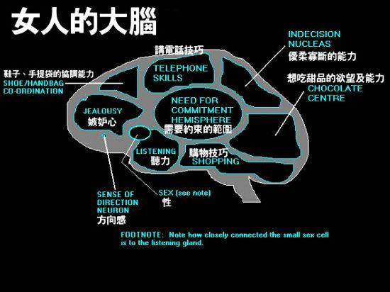 男人与女人的大脑结构!图片
