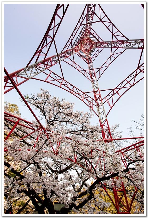 红色铁塔,蓝色天空配著全开的樱花
