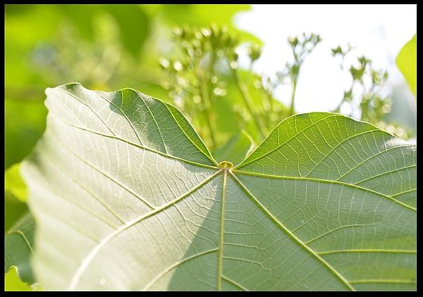 背景 壁纸 昆虫 绿色 绿叶 树叶 植物 桌面 600_422