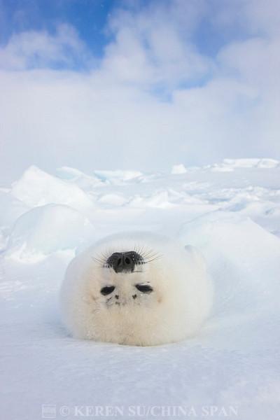 好高级… 【东京游】我的日本行计划是…  说到冰天雪地里的可爱动物