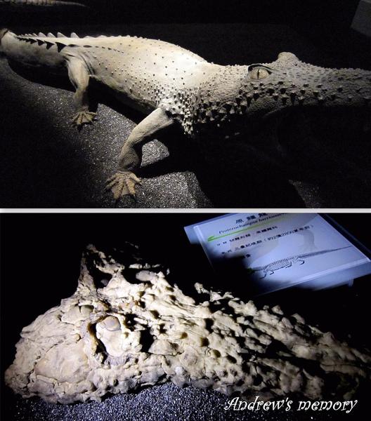 发现新种恐龙 是美洲大陆最早的有角恐龙