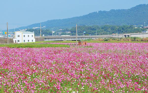 粉色乡间田野风景图片
