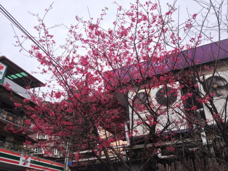 烏來-台車站前