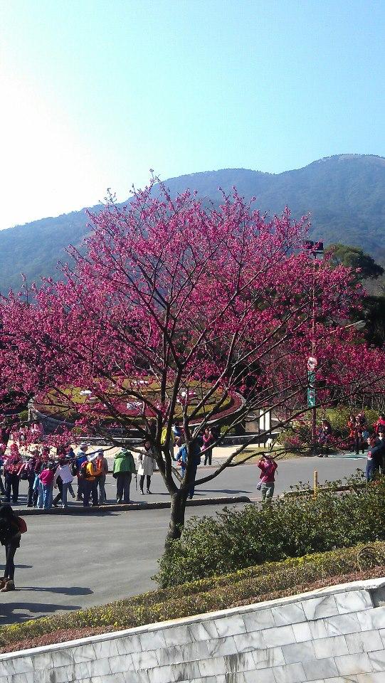 陽明山國家公園