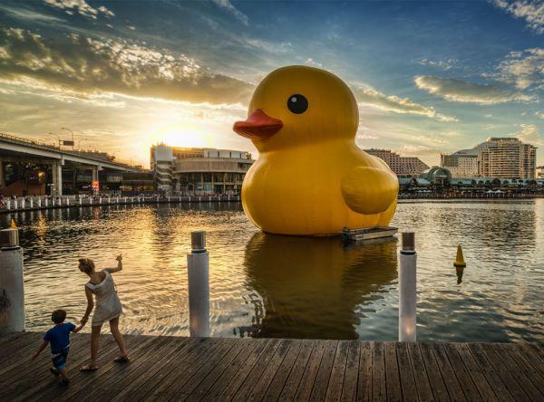 黃色大鴨鴨12月要來台灣了!從香港一路向上遊 - 旅遊行程分享版 ::透可小鎮::Citytalk城市通
