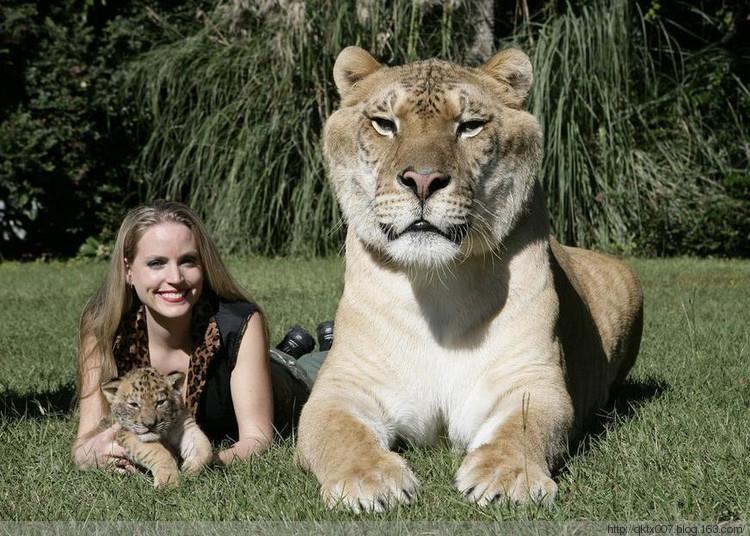 无敌可爱-世界上最大的猫科动物你看过吗?