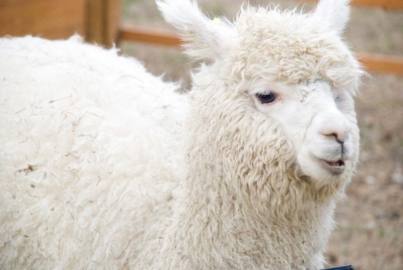 cnn排名世界十大可爱动物-你猜对了吗?
