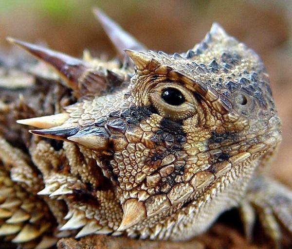 10种世界上最奇怪奇异的生物!
