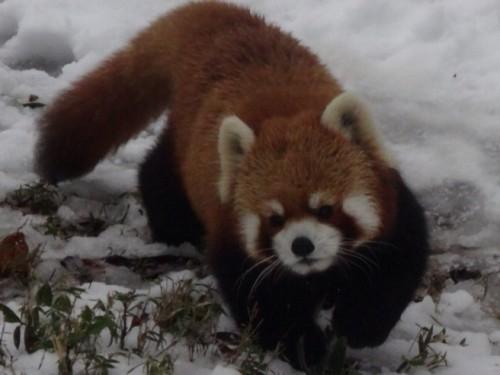 (讨论)你觉得地球上最可爱的动物是什麼呢?