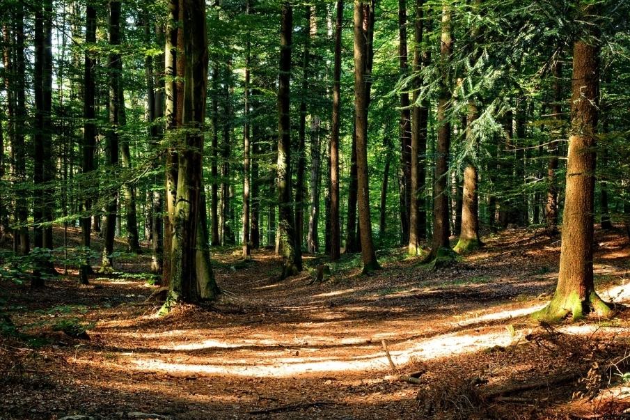 壁纸 风景 森林 植物 桌面 905_603
