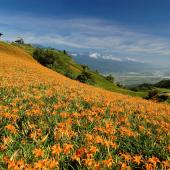 2013花蓮赤科、六十石山金針花季